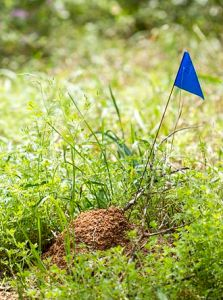 fire_ant_mound_16371103174