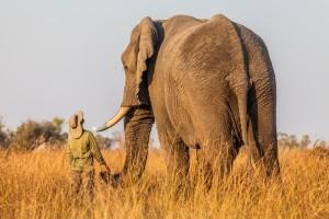animal-size-comparison-25